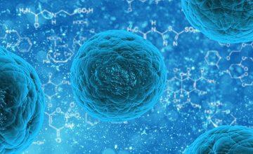 Canadian stem cell funding surge underscores U.S. uncertainty