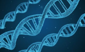 Magnetic Stem Cells for Gene Engineering