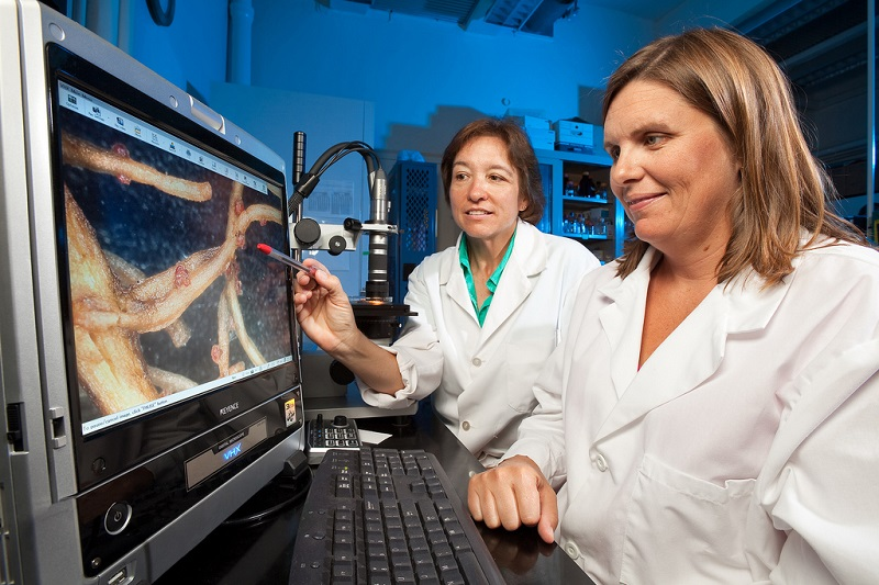 Artificial Intelligence Achieves Near Perfect Performance in Disease Diagnosis