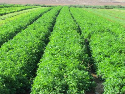 Advancing Technology Could be Used in the Near Future to Increase Crop Yields